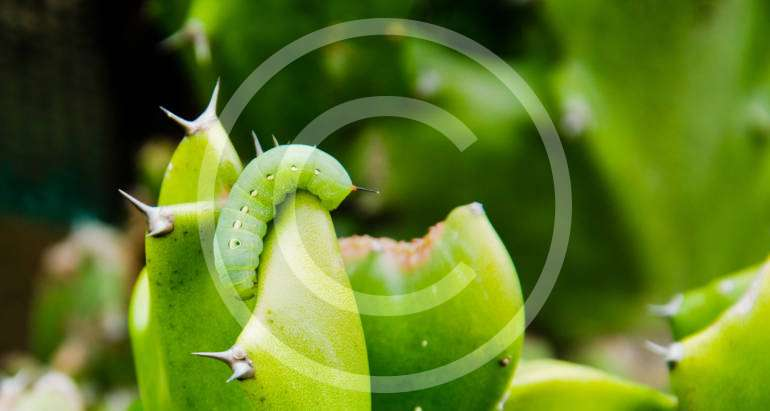 10 Most Common Home Pests and Why They are Dangerous