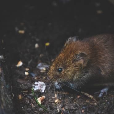 Rodent Proofing Service